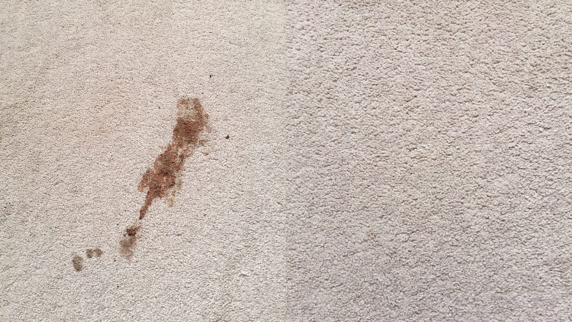 Puppy accident stain